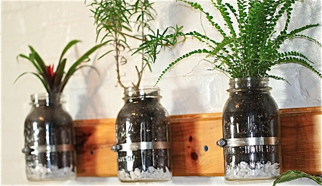 9 ideas de plantas en botellas de vidrio 1