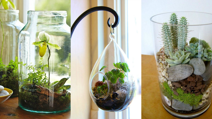 9 ideas de plantas en botellas de vidrio 2