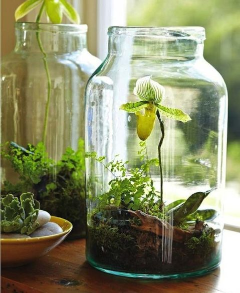 9 ideas de plantas en botellas de vidrio 5