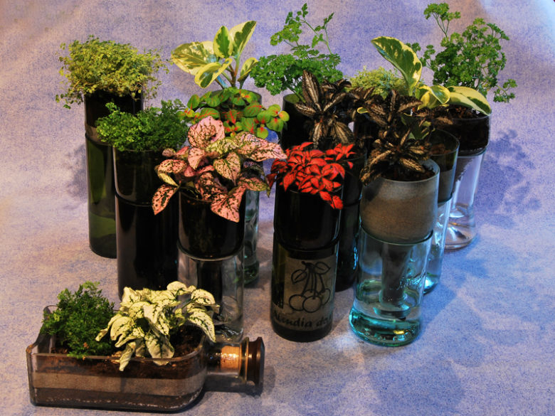 ideas de plantas en botellas de vidrio