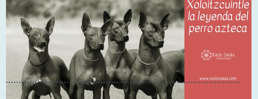 Xoloitzcuintle, el perro Azteca